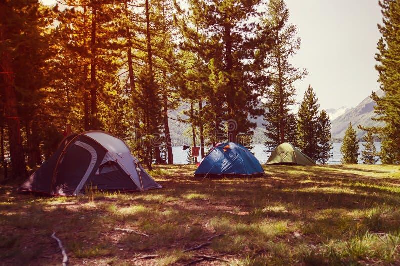 Många campa tält på fält i nationalpark med solljus i morgon royaltyfri foto