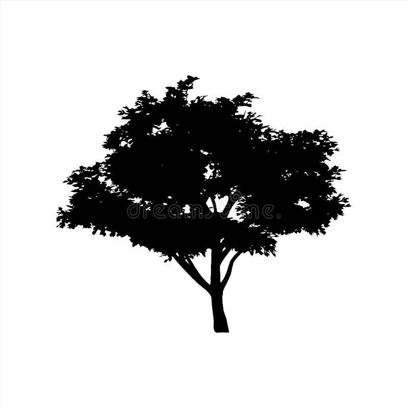 många ekologibilder mer min portföljtreevektor silhouette Isolerad bakgrund arkivbilder