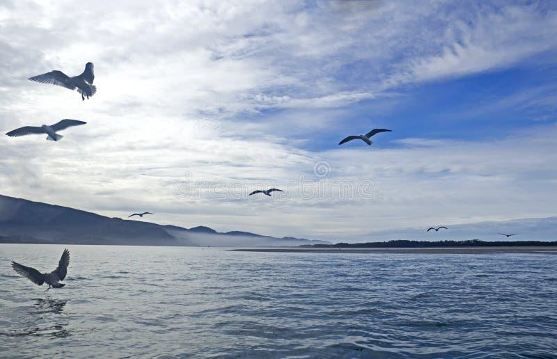 Många fåglar Silhouetted flyg på fjärden fotografering för bildbyråer