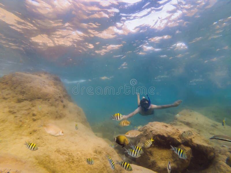 Många fisk, anemonsandhavsvarelser, växter och koraller under vatten nära havsbottnen med sand och stenar i blått och royaltyfri bild