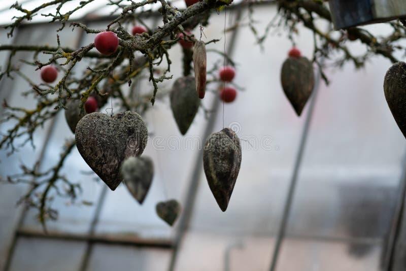 Många gamla red ut gråa trähjärtor som täckas med laven, dekorerar ett höstträd med äpplen i trädgården av en barnkammare royaltyfria foton