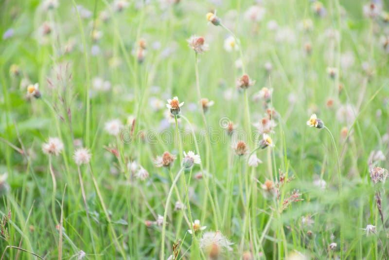 Många gräsblommor arkivbilder