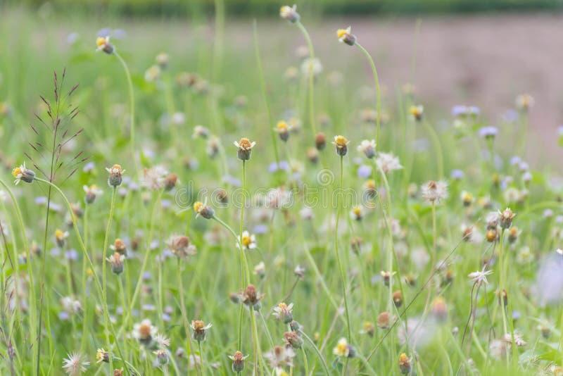 Många gräsblommor royaltyfri fotografi