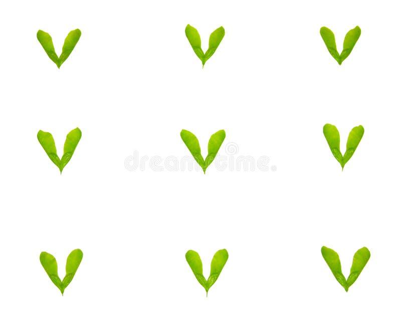 Många gräsplansidor på en vit bakgrund Top beskådar arkivfoto