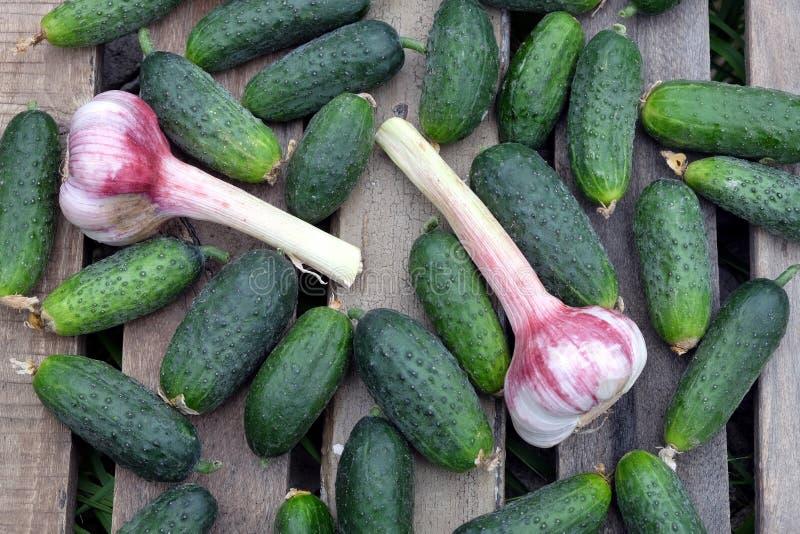 Många gurkor med vitlök på utomhus- bästa sikt för gammal trätabell royaltyfri bild