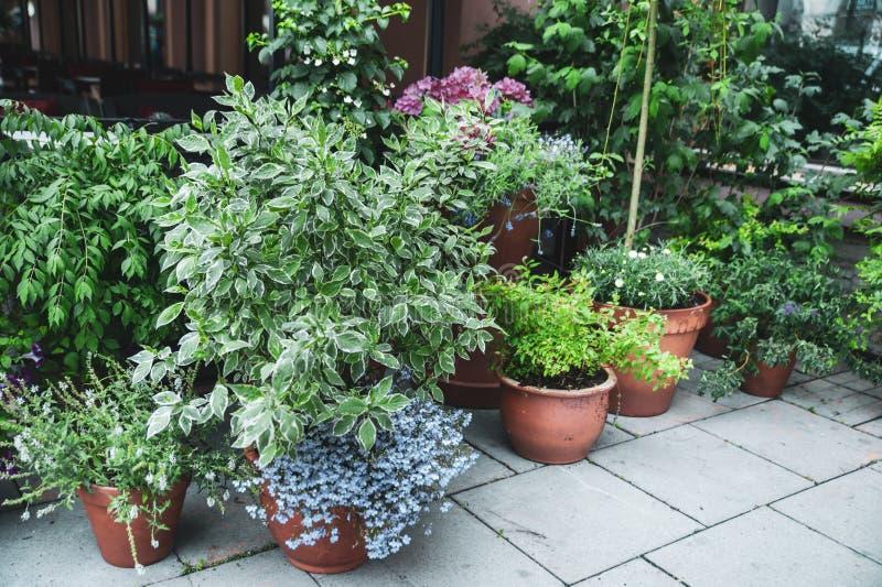 Många härliga inlagda växter utanför ett kafé arkivbilder