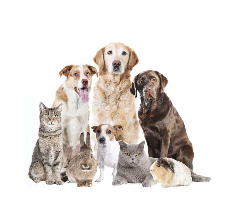 Många husdjur framme av vit bakgrund arkivfoton