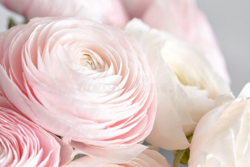 Många i lager kronblad Persisk buttercup Gruppgräns - den rosa ranunculusen blommar ljus bakgrund tapet vertikalt foto arkivbild