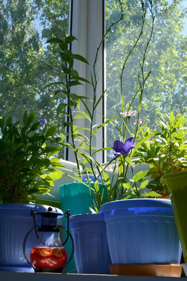 Många inlagda blommor på balkongen Hemtrevlig stads- trädgård i hem med växter och den dekorativa lampan arkivfoton