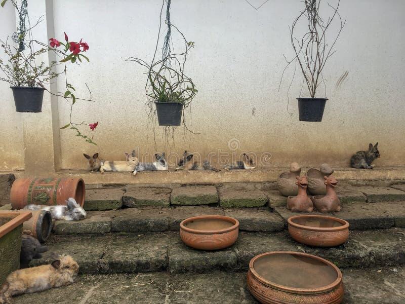 Många kaniner är sammanträde och vilar i lantgården arkivfoton