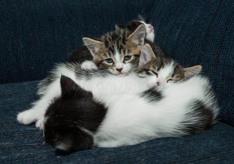 Många katter som kopplar av på soffan royaltyfri fotografi