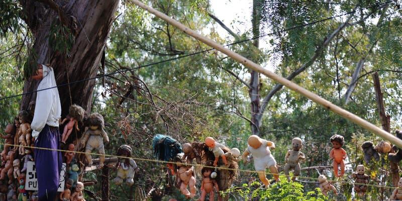 Många kusliga dockor som hänger i träden på Xochimilco, Mexiko - stad royaltyfria foton