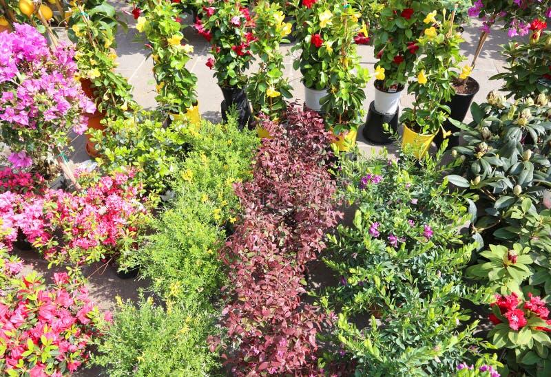 många lade in blommor som är till salu i den lokala marknaden av blommor arkivbild