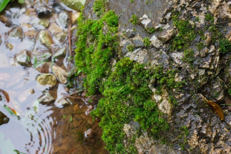 Många mossor är på vaggar nära vattenfallet i parkerar Naturlig bakgrund arkivfoto