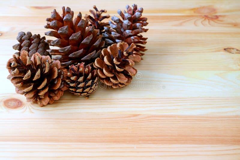 Många naturligt torrt sörjer kottar i olikt format som isoleras på ljus - brun trätabell royaltyfria bilder