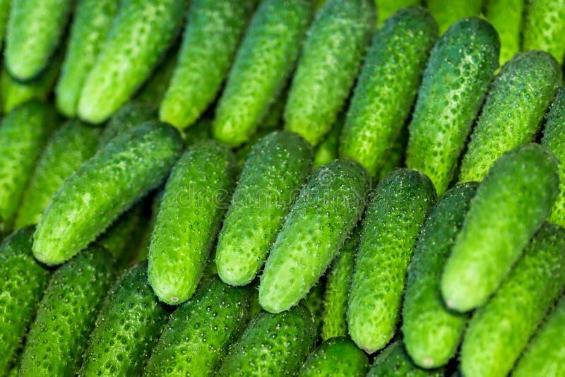 Många nya gröna bio gurkor på en lokal marknad eller bönder shoppar Grönsakcucmberbakgrund royaltyfri fotografi