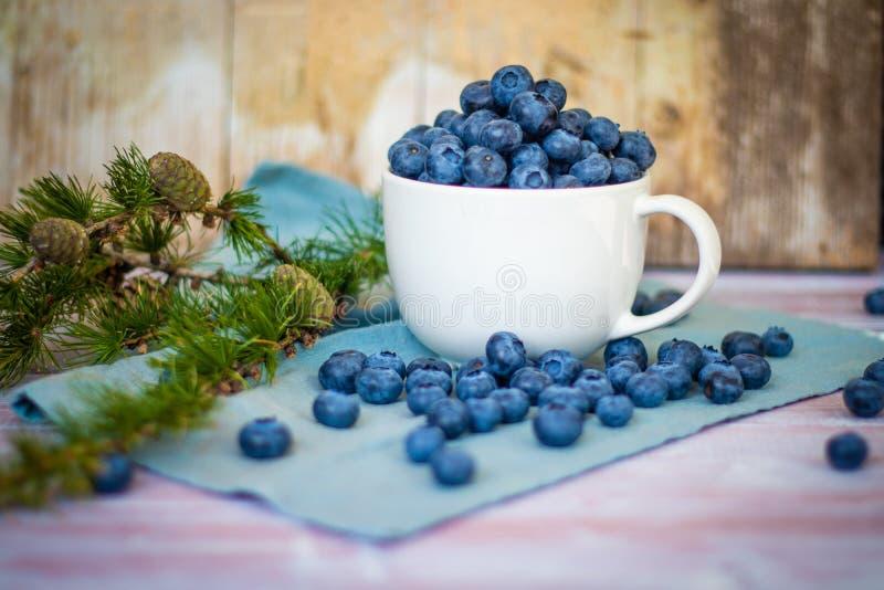 Många nya kanadensiska blåbär i en stor vit rånar och spridde andra runt om den arkivfoton