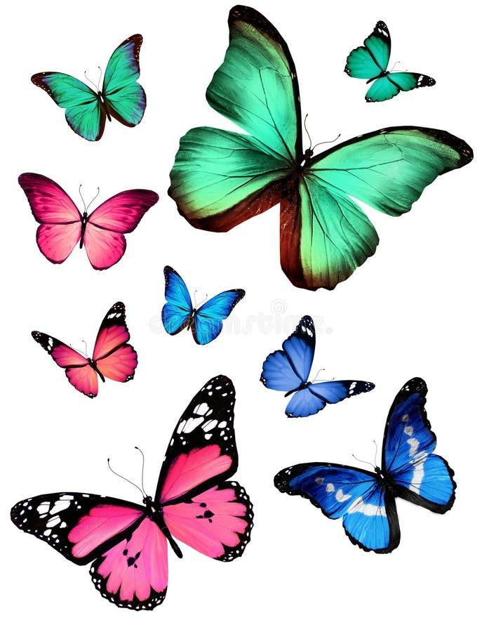 Fjärilar bilder gratis
