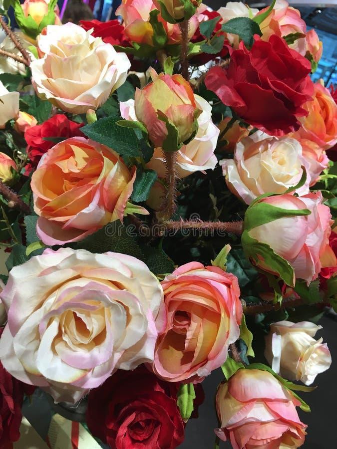 Många röda vita rosa rosor i trädgården arkivfoton