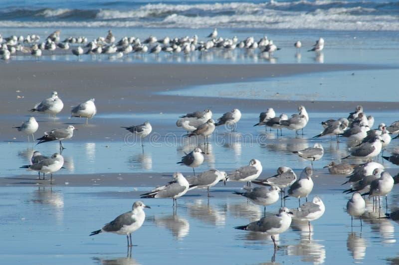Många Seagulls Royaltyfri Foto