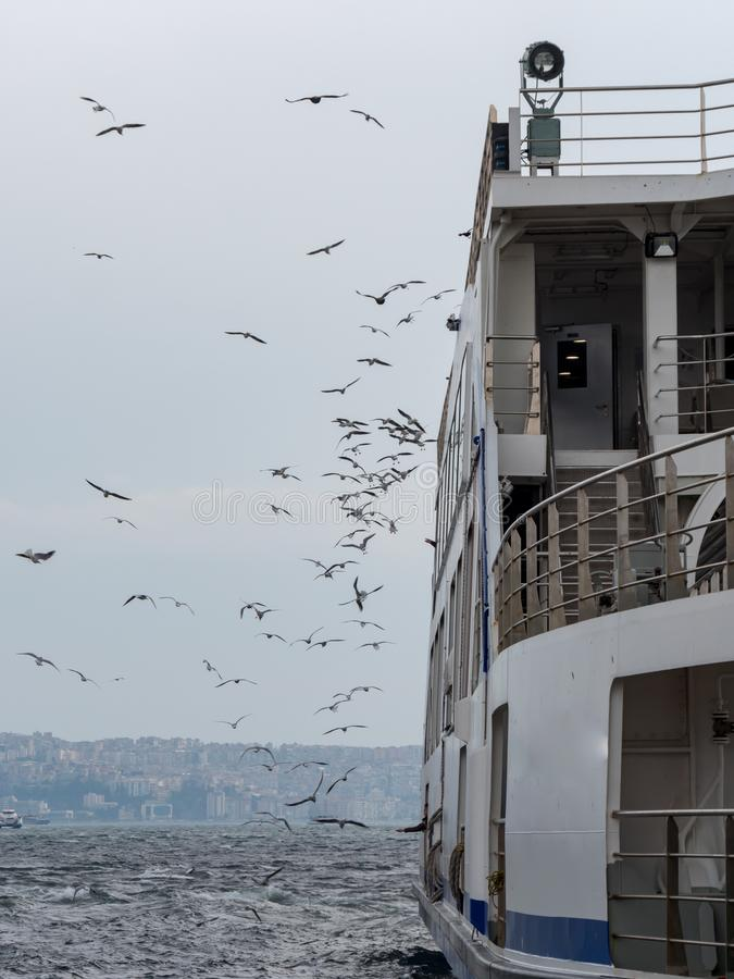 Många Seagulls som flyger nära färjan i izmir, Turkiet arkivfoton