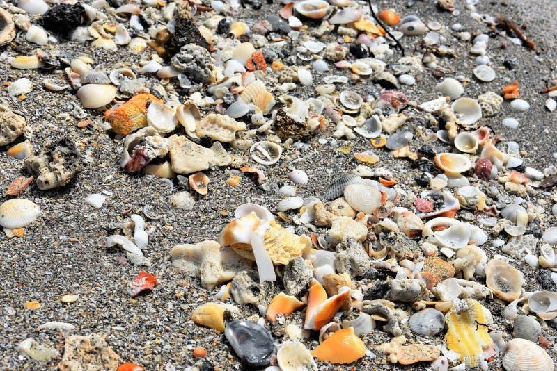Många skal på den tropiska stranden arkivbild
