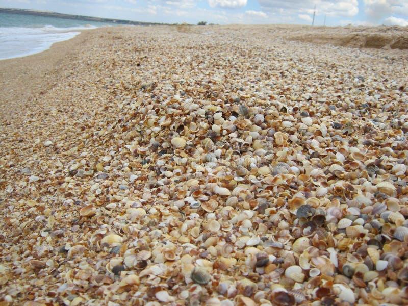 Många skal på stranden arkivfoto