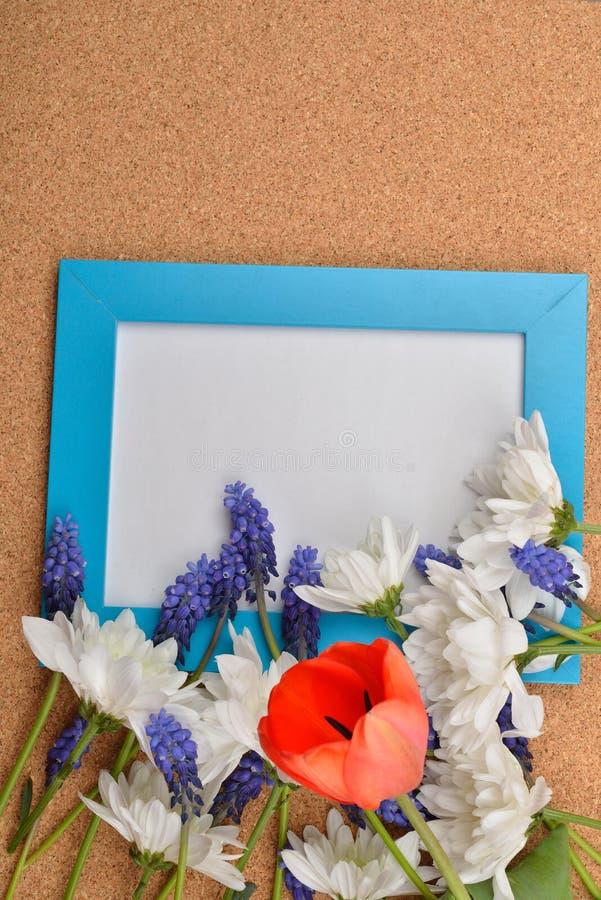 Många slösar den öppna druvahyacinten, den vita krysantemumet och röda tulpan arkivbild