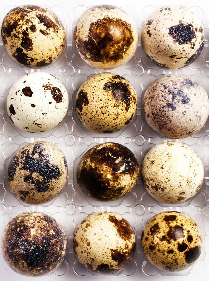 Många små bruna prickiga vaktelägg i en plast- ask, closeup. royaltyfri fotografi
