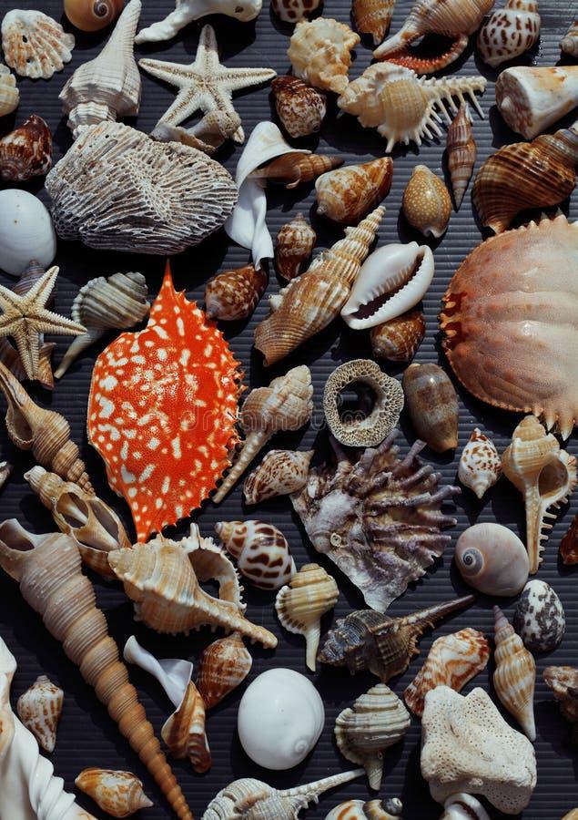 Många snäckskal på setout samman med krabban arkivfoto