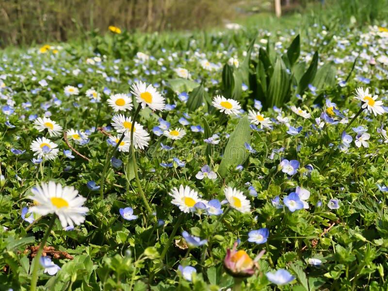 Många sort av den lilla blåa blomman arkivfoto