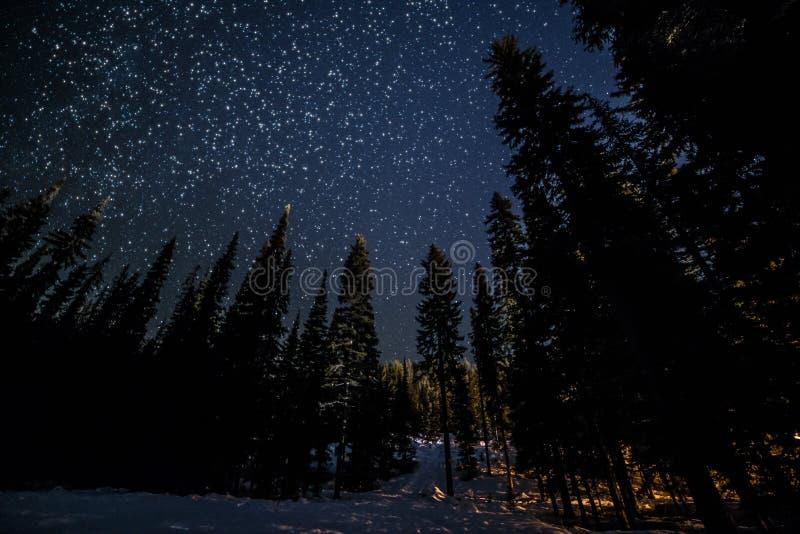 Många stjärnor ovanför Forest Trees royaltyfri fotografi