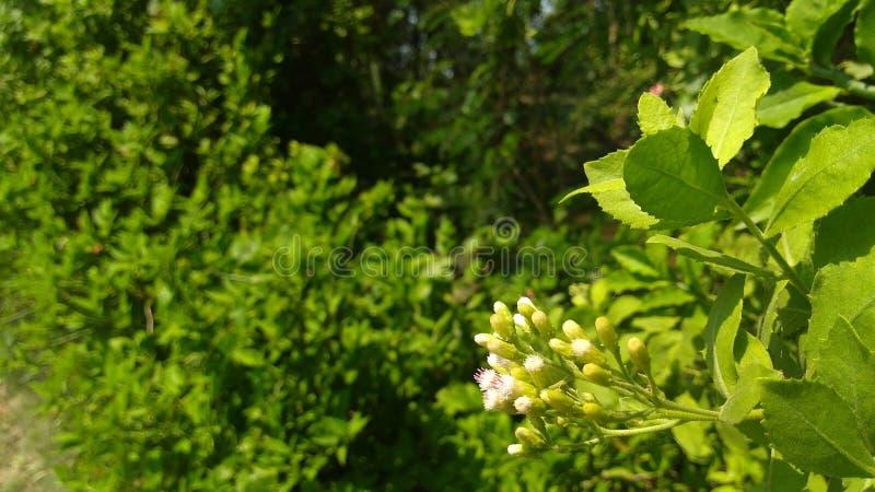 Många träd av grönt kullfotografi och dem har många små blommor arkivfoton