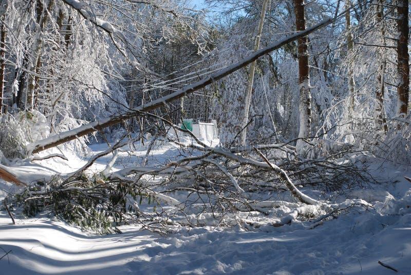 Många träd som avverkar ner under en vinterhäftig snöstorm royaltyfri fotografi