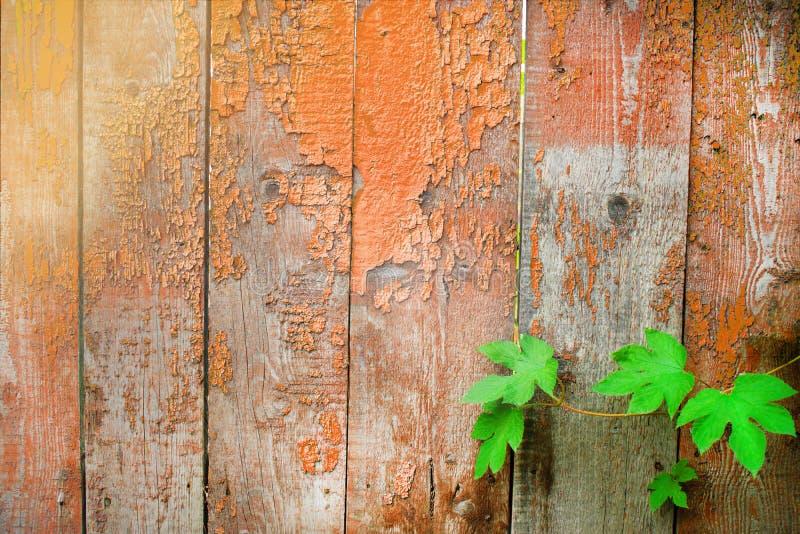Många träplankor och gröna sidor royaltyfri fotografi