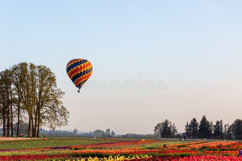 Mångfärgad ballong för varm luft som svävar på en låg höjd över tulpanfält arkivfoton