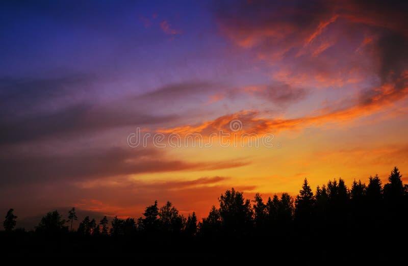 Mångfärgad himmel över mörk skog royaltyfri fotografi