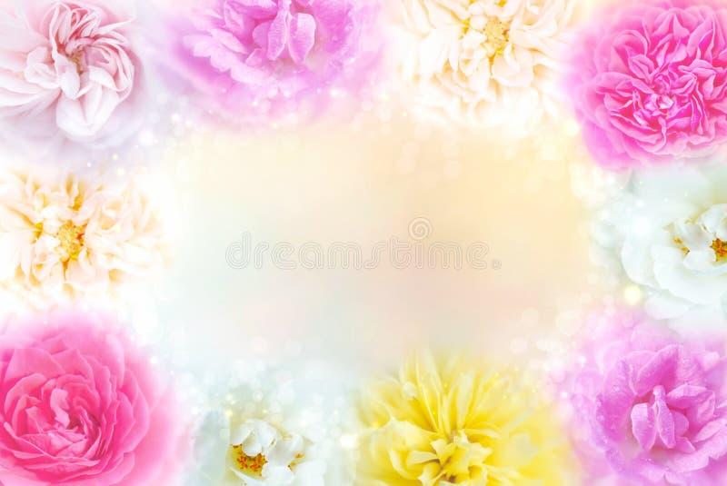 mångfärgad rosgränsbakgrund i pastellfärgad signal med kopieringsutrymme för valentin vektor illustrationer