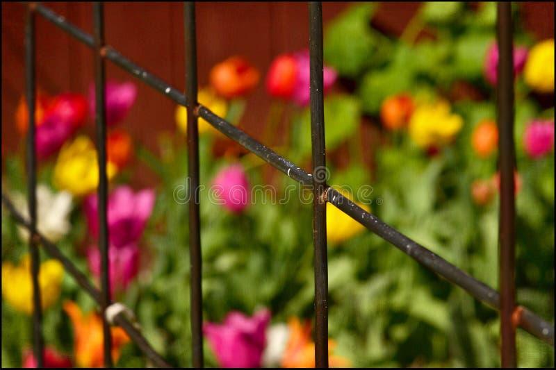 Mångfärgade blommor bak staketet fotografering för bildbyråer