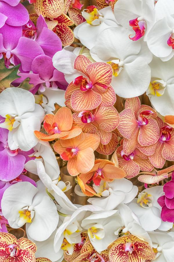 Mångfärgade orkidér som ordnas på bakgrunder fotografering för bildbyråer