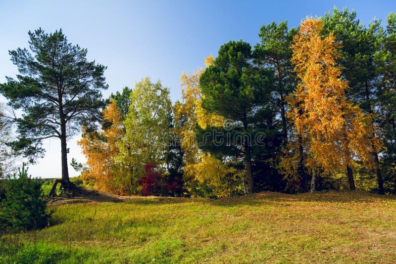 Mångfärgade träd och cederträ med ett hus för fåglar fotografering för bildbyråer
