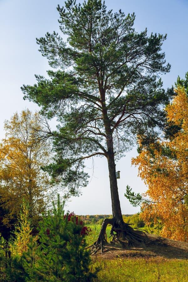 Mångfärgade träd och cederträ med ett hus för fåglar arkivfoton
