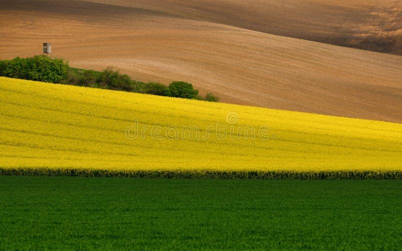 Mångfärgat lantligt landskap En grön veteåker, en remsa av den gula blomningen våldtar och bryner plogad åkermark Krabbt odla arkivbilder