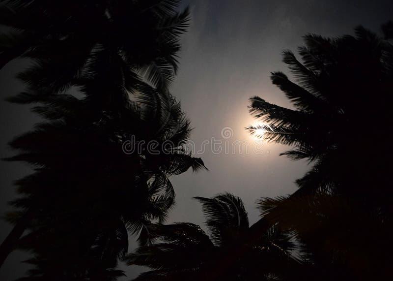 Månsken - silverfullmåne bak konturer av palmträdsidor i mörk natthimmel royaltyfri bild