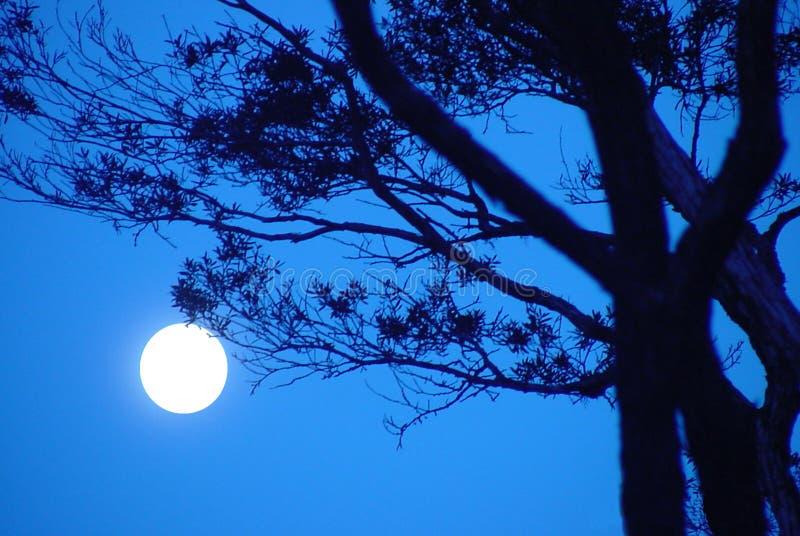 månskensonata arkivfoton