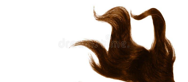 Mèche teinte bouclée de cheveux d'isolement sur le fond blanc photo libre de droits