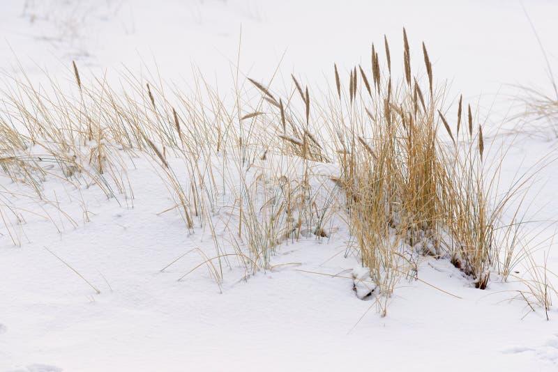 Mèches dans la neige, scène d'hiver image stock