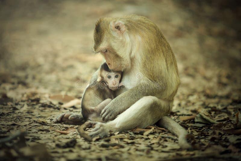 Mère du singe nouveau-né images libres de droits