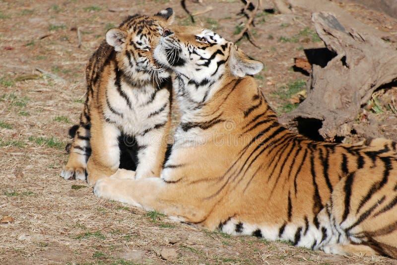 Mère et animal photographie stock