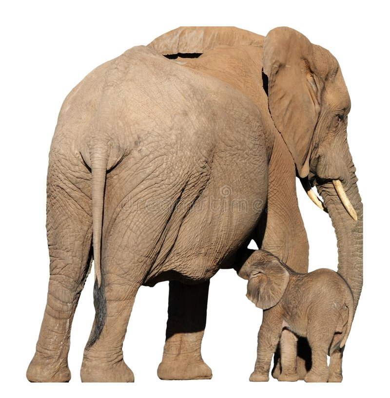 Mère et chéri d'éléphant photos libres de droits